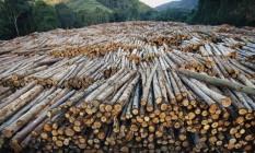 Ajuda da natureza. Clima favorável no país está entre razões para sucesso do setor de papel e celulose. No Brasil, eucalipto fica pronto para o corte em só sete anos, enquanto no Chile, um dos concorrentes, processo demora até 18 anos Foto: Mark Moffett