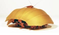 A barata real tem 9 milímetros de espessura; a robótica é do tamanho da palma da mão Foto: Divulgação/Universidade da Califórnia em Berkeley