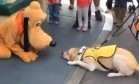 Cão-guia conhece Pluto e não consegue conter animação Foto: Reprodução/Facebook