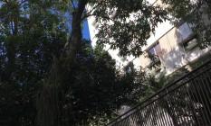 Árvore inclinada no Jardim Botânico preocupa moradores Foto: Foto enviada pela leitora Liana Correa Fortes para o Whats App do GLOBO / Eu-Repórter