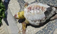 Tartaruga é colocada em calçada em Ipanema Foto: Acervo pessoal / Ana Carolina Albizzati