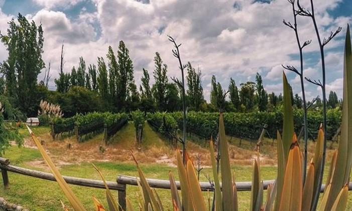 Mendoza, na Argentina Foto: @mlmenezes / Instagram