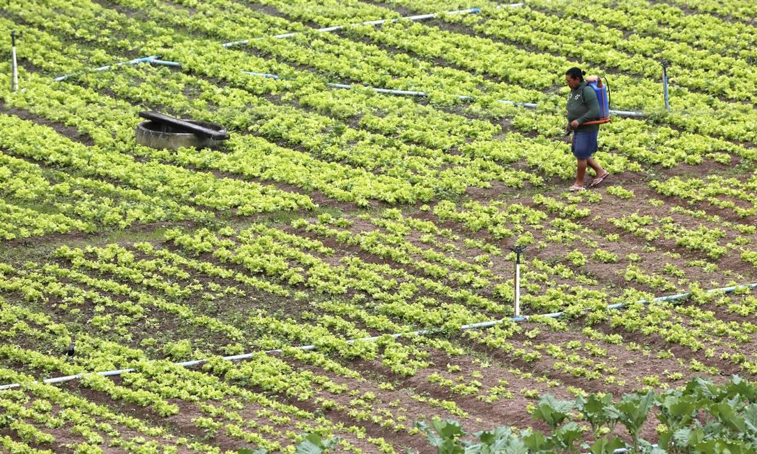 Clima diferente vai afetar lavouras e reduzir a alta esperada na disponibilidade de alimentos que fazem bem à saúde, como frutas e vegetais Foto: / Custódio Coimbra
