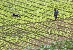 Clima diferente vai afetar lavouras e reduzir a alta esperada na disponibilidade de alimentos que fazem bem à saúde, como frutas e vegetais Foto: Custódio Coimbra