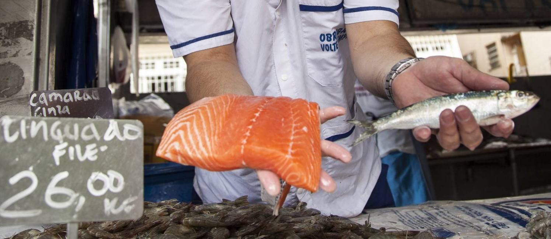 Comerciante Pascoalino Gentili Filho mostra a possível troca: sardinha pelo salmão. Foto: Hermes de Paula / Agencia O Globo / Agência O Globo
