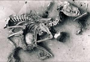 Ossada de cachorro encontrada na Sibéria Foto: Divulgação/Universidade de Alberta