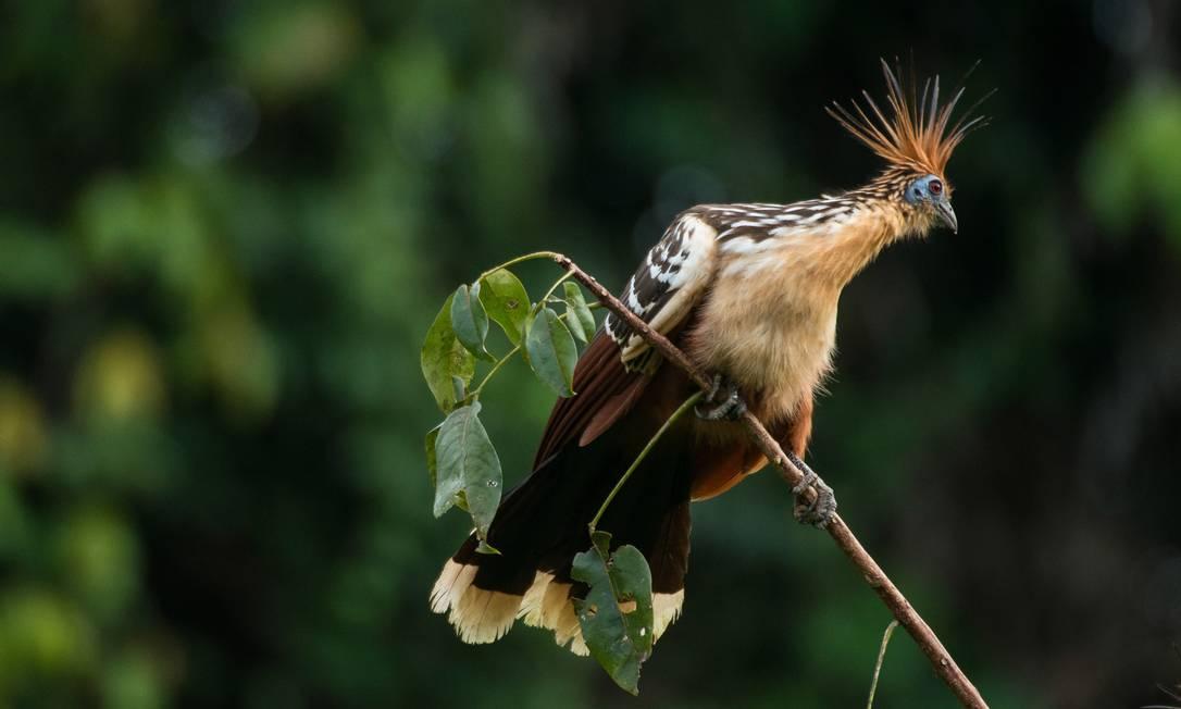 Biodiversidade das proximidades do rio Tapajós é considera grande mesmo para região amazônica Valdemir Cunha / © Valdemir Cunha / Greenpeace
