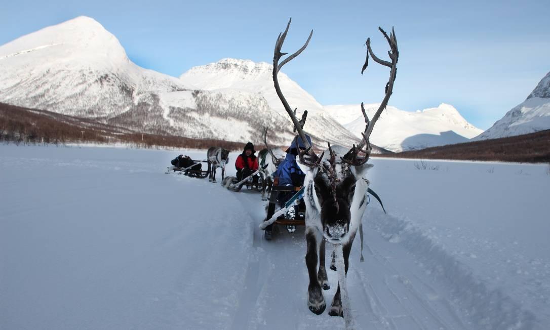 Trenó de renas em Camp Tamok, em Oteren, perto de Tromso, no norte da Noruega Foto: Eduardo Maia / Eduardo Maia