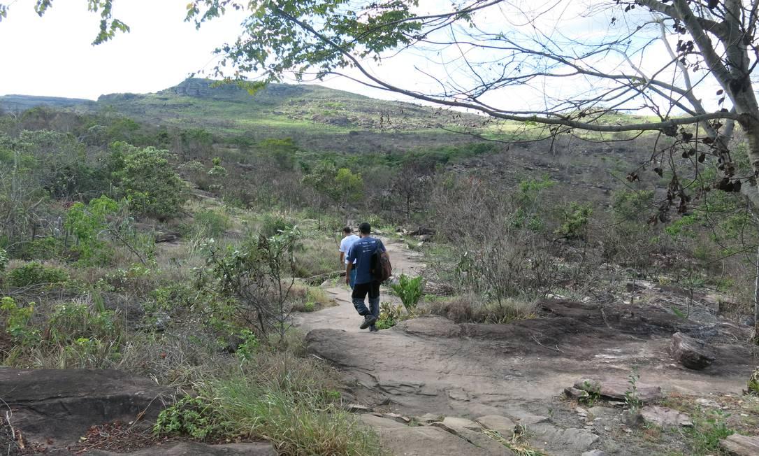Conservação Internacional tenta recuperar vegetação para salvar as nascentes dos rios Ana Lucia Azevedo