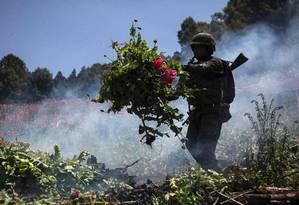 Soldado mexicano participa de operação para destruir plantação de papoulas em Guerrero, no México Foto: PEDRO PARDO / AFP
