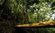 Melhorias. Almeida caminha por uma ponte na trilha, colocada pelos monitores do Parque da Tijuca