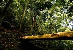Melhorias. Almeida caminha por uma ponte na trilha, colocada pelos monitores do Parque da Tijuca Foto: Guilherme Leporace / Fotos de Guilherme Leporace