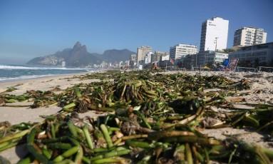 Gigogas chegaram à Praia de Ipanema Foto: Custódio Coimbra / Agência O Globo