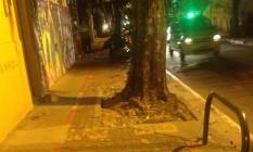 Árvores e pinos de ferro no meio da ciclovia Foto: Leitora Ivone Lafayette / Eu-Repórtter