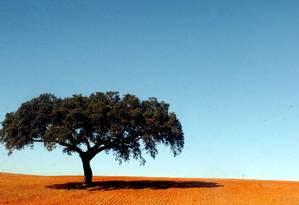 Campos pintados de verde e amarelo na paisagem alentejana Foto: PUBLICO / ANTONIO CARRAPATO