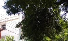 Galhos de árvore na Rua Cândido Gaffrée Foto: Foto enviada pelo leitor Paulo Leite para o WhatsApp / Eu-Repórter