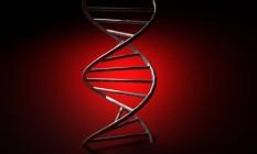 Edição de DNA permitiria encontrar a história de cada célula e mostrar como elas se desenvolvem desde a fertilização de um único óvulo Foto: Reprodução