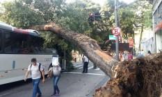 Ônibus foi atingido por árvore no Centro do Rio Foto: O Globo com o leitor Márcio Cavalcanti