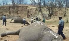 Elefantes mortos por cianeto em outubro do ano passado Foto: Reuters