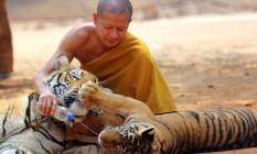 Monge budista brinca com dois animais no Templo dos tigres Foto: Sakchai Lalit / AP/12-2-2015