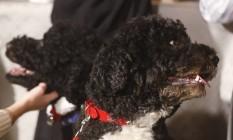 Os dois cachorros presidencias, Bo e Sunny Foto: Charles Dharapak / AP