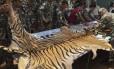 Agentes florestais e policiais examinam pele de tigre encontrada em caminhonete que deixava tempo na Tailândia