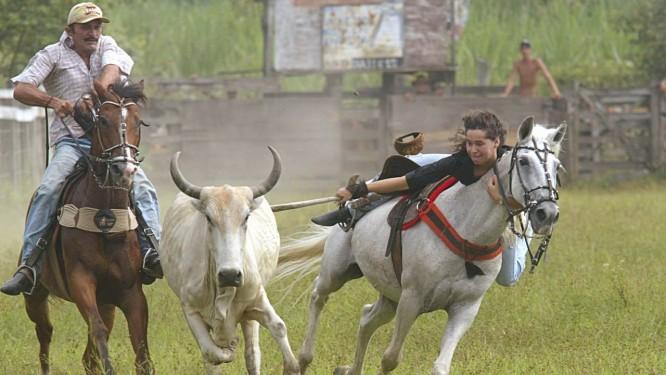 Vaquejada em Duque de Caxias, Baixada Fluminense: cultura ou crueldade? Foto: Gustavo Azeredo / Gustavo Azeredo/17-2-2005