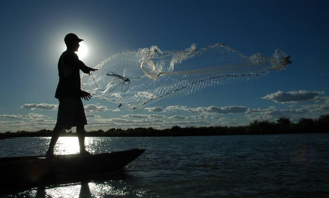 Peixes de água doce, como o surubim e a piaba, foram substituídos por espécies de água salobra Foto: / João Zinclair/Acervo CBHSF