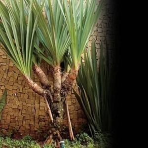 Dez espécies de plantas que trazem sorte Foto: Reprodução