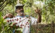 """O agricultor Adeílson Ataliba mostra um cafeeiro do seu terreno em Silva Jardim: """"A terra era seca e o solo, rachado, quase pedra. Depois que comecei a agrofloresta, mudou tudo. Você cava com o pé, de tão macio"""""""