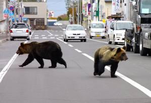 Ursos caminham pelas ruas de Shari, também no norte do país Foto: AFP