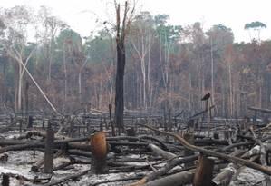 Fotos de queimadas na Amazônia no fim de novembro - Floresta Nacional do Tapajós Foto: Divulgação/Erika Berenguer