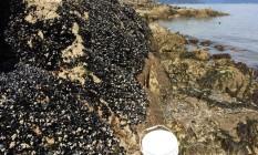 Mexilhões na praia de Cooper, no litoral Oeste do Canadá: doença, que atinge sistema circulatório como a leucemia em humanos, está afetando os animais Foto: Annette F. Muttray