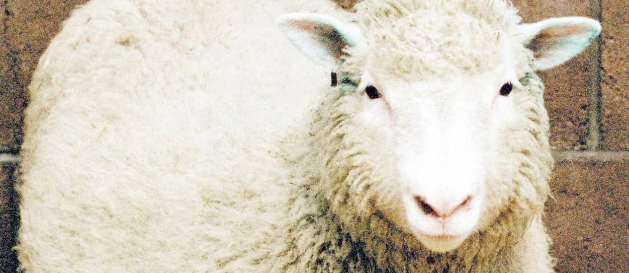Pioneira. A ovelha Dolly já com sete meses de idade, quando foi apresentada ao mundo como o primeiro clone feito a partir de célula de um animal já adulto Foto: Reuters