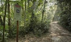 Medo na Floresta da Tijuca. Na foto, a trilha da Lagartixa Foto: Fernando Lemos / Agência O Globo / Arquivo / 23/09/2015