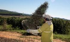 Menos grãos. Trabalhador em plantação de café, em Minas Gerais: estoque mundial deve cair 11% e pressiona preço Foto: Patricia Monteiro/Bloomberg News/14-06-2016