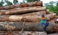 Levantamento foi realizado em 400 áreas de Paragominas e Santarém, dois municípios do Pará localizados na região de fronteira agrícola da Amazônia
