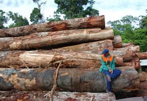Levantamento foi realizado em 400 áreas de Paragominas e Santarém, dois municípios do Pará localizados na região de fronteira agrícola da Amazônia Foto: Jos Barlow / Divulgação