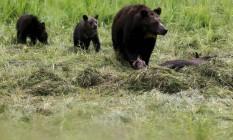 O Parque Nacional Glacier registra um ou dois encontros não fatais entre humanos e ursos por ano, mas a mortes são raras: apenas dez em mais de um século Foto: REUTERS/Jim Urquhart