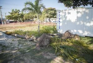 Palmeiras retiradas da Estrada Francisco da Cruz Nunes no início desta semana Foto: Analice Paron