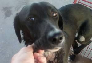 O cachorro baleado em Coelho Neto Foto: Divulgação