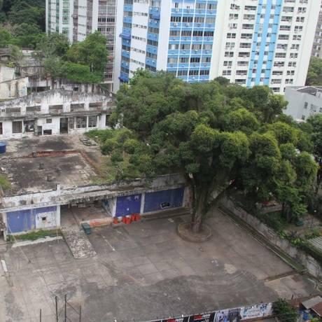 Preservação. Projeto mantém a mangueira centenária do terreno Foto: Divulgação/A+ Arquitetura