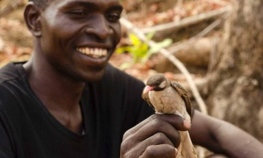 Caçador de mel com um passarinho 'guia do mel' em Moçambique Foto: Claire Spottiswoode / Divulgação