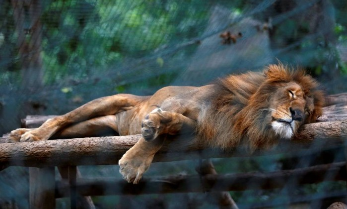 Animais morrem de fome em zoológico na Venezuela
