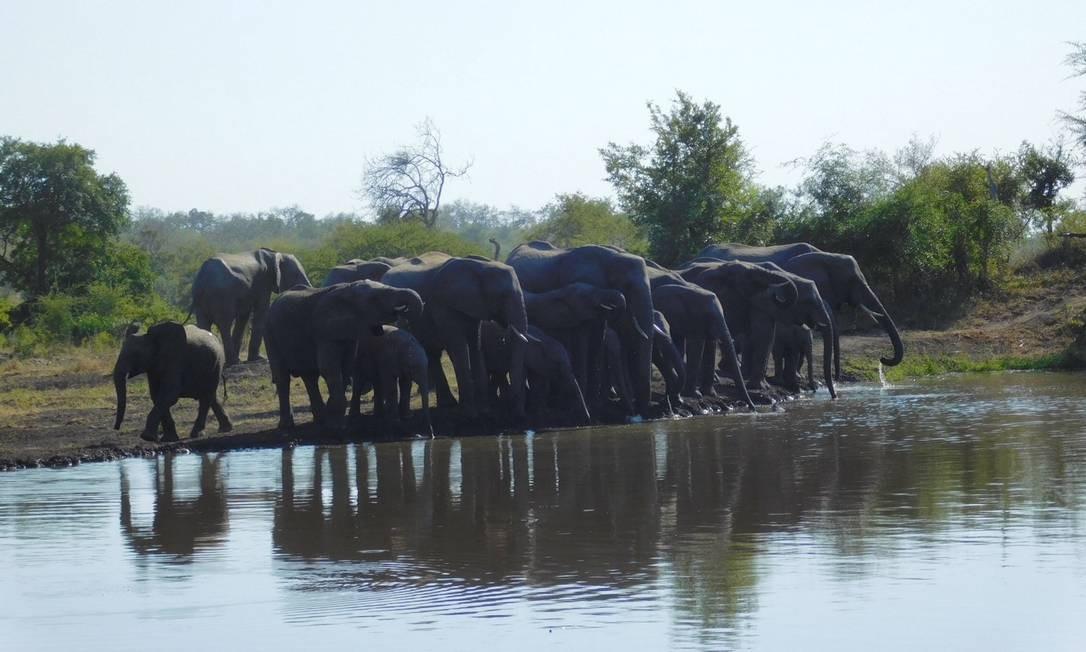 Grupo de elefantes à beira de um lago na reserva Sabi Sands Foto: Ludmilla de Lima / O Globo