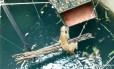Leopardo foi resgatado após cair em poço com 20 metros de profundidade