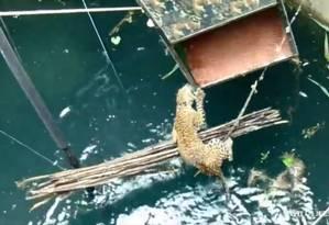 Leopardo foi resgatado após cair em poço com 20 metros de profundidade Foto: REPRODUÇÃO/ Wildlife SOS