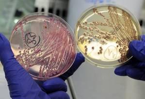 Placas com a bactéria E. coli, em um laboratório da Alemanha Foto: REUTERS / FABIAN BIMMER