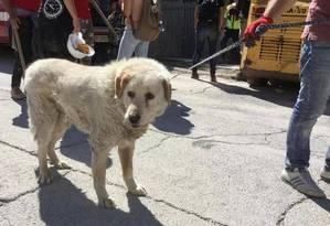 Bravo: cão de guarda se recusou a deixar casa destruída Foto: Reprodução da internet