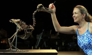 Uma funcionária da casa de leilões prepara o esqueleto dodô para exposição Foto: Gareth Fuller / AP